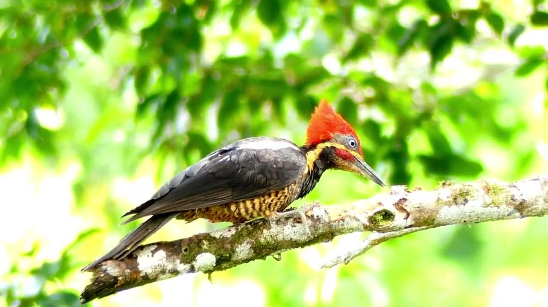 Close Up View of a Woodpecker Perched on a Tree Branch