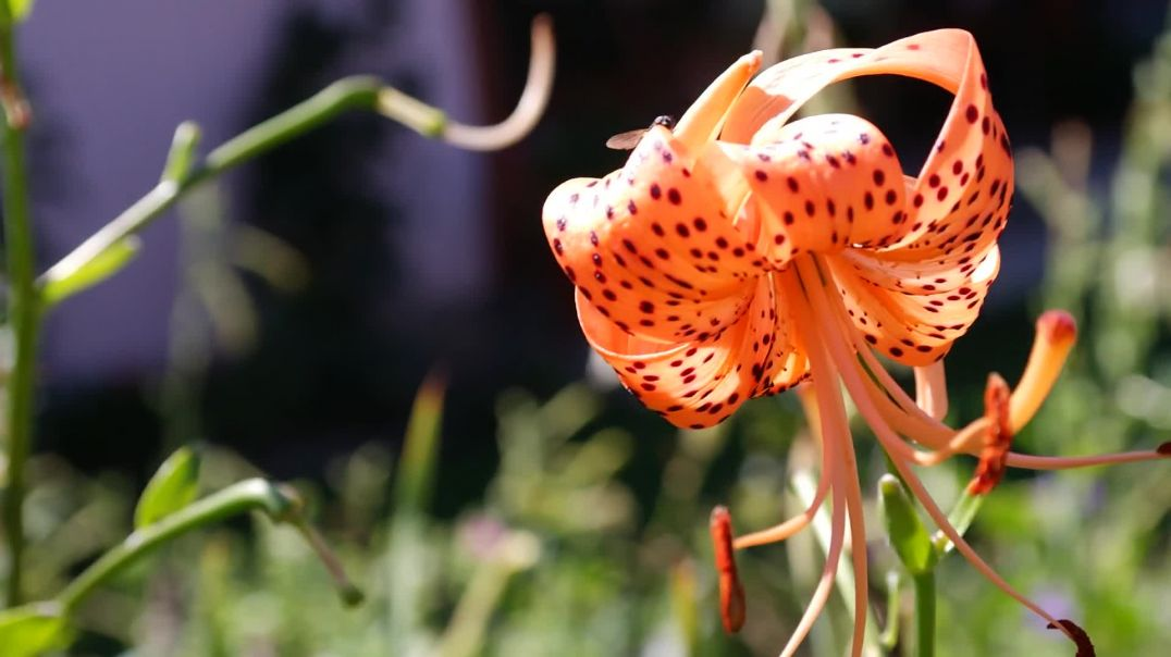 Close-Up View of an Orange Flower