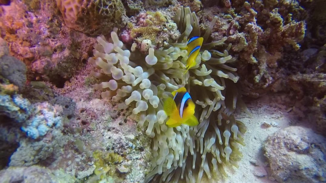 Exotic Fishes Under The Sea