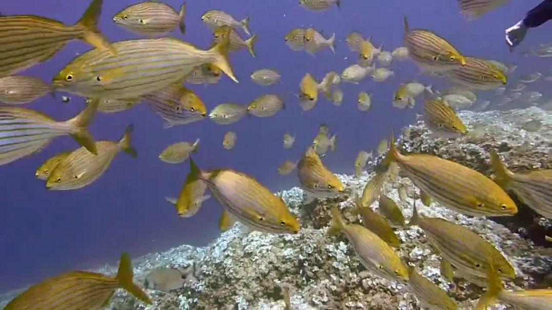 Amazing School of Fishes in the Ocean