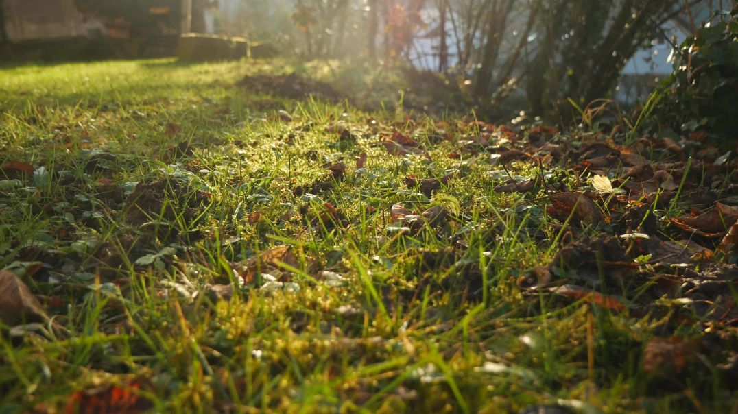 Green Grass With Fallen Leaves