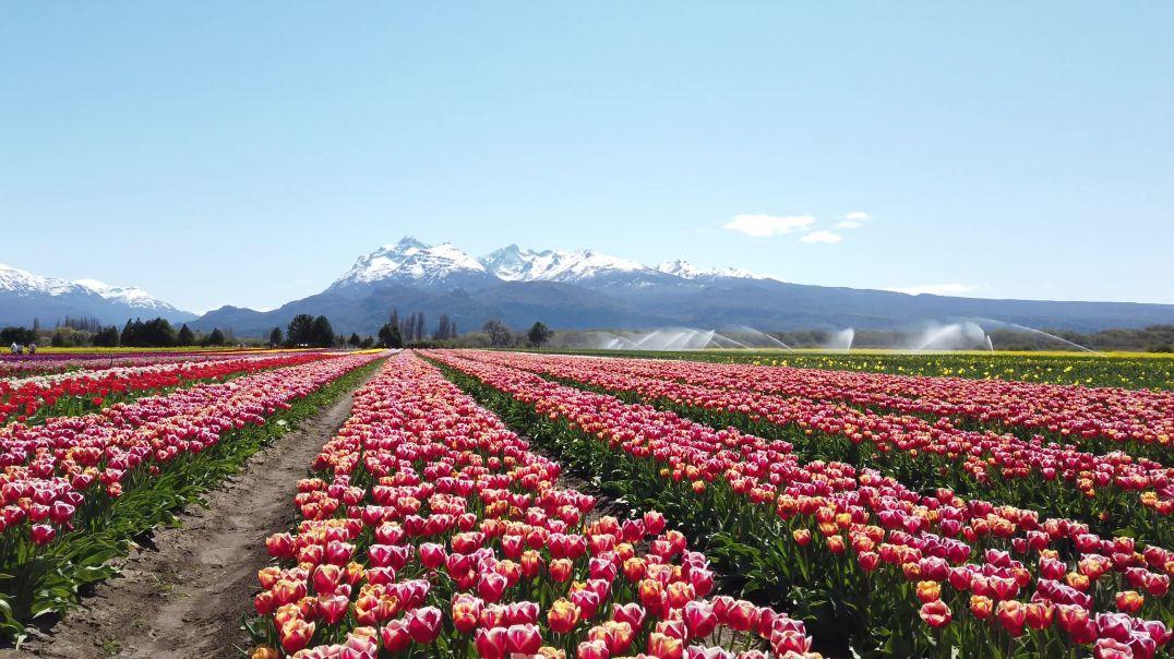 Field Of Flowers Under A Blue Sky