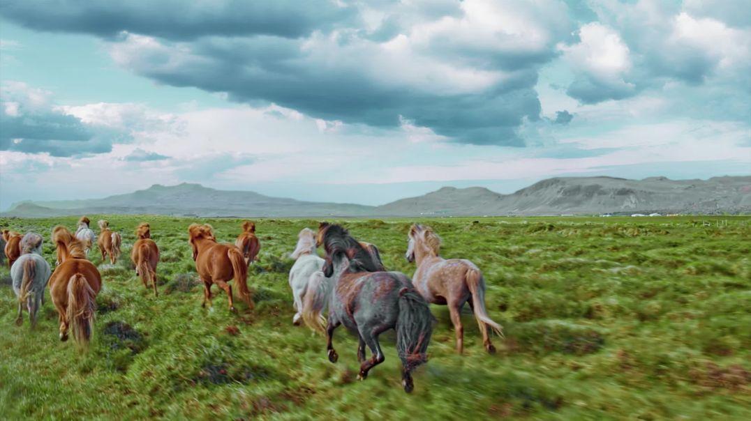 Horses - 81119